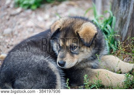 Cute Little Puppy Lying On The Sand
