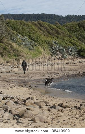 A Lone Walker At The Beach With Dogs