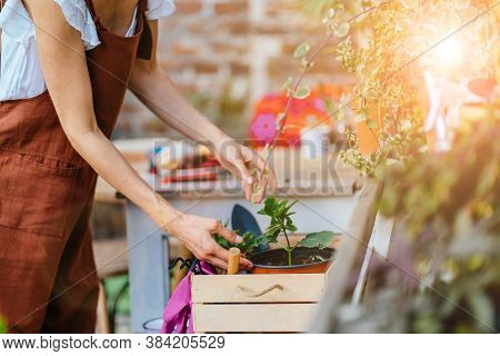 Close Up Of Hands Unrecognasible Woman Holding Box With Plants Pots, Taking Care Of Her Plants. Hous