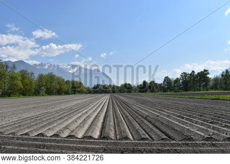 An Acre With Symmetric Lines During Springtime In Liechtenstein