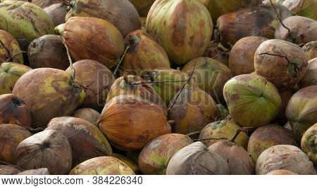 Pile Of Ripe Coconuts From The Harvest Of The Coconut Plantation In Thailand. Raw Material For Virgi