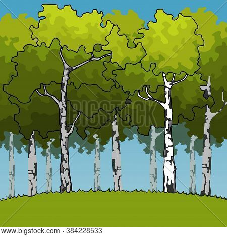 Cartoon Green Birch Forest On Green Meadow