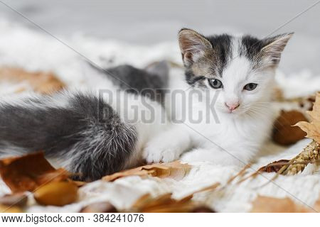 Adorable Kittens Resting In Autumn Leaves On Soft Blanket. Two Cute White And Grey Kittens Cuddling