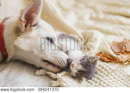 Cute White Dog Cleaning Little Sleepy Kitten On Soft Bed In Autumn Leaves. Adoption Concept. Dog Gro