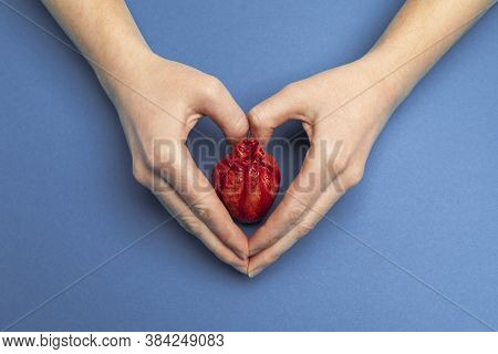 Heart Surgery Concept, Hands Holds Organ On Blue Background. Life Saving And Transplantation.