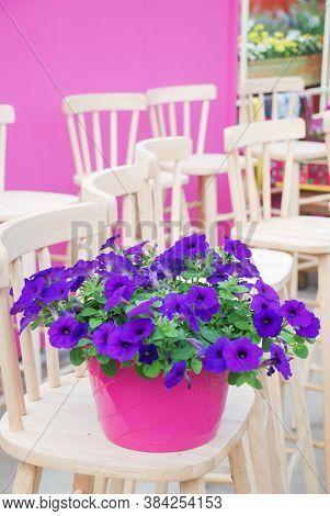 Blurry Petunia, Petunias In The Tray,petunia In The Pot, Blue Petunia