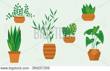 Plant In Pot Vector Illustration Set, Cartoon Flat Different Indoor Potted Decorative House Plants F