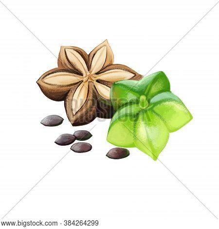 Sacha Inchi Digital Art Illustration Isolated On White. Plukenetia Volubilis, Sacha Inchi Peanut, Mo