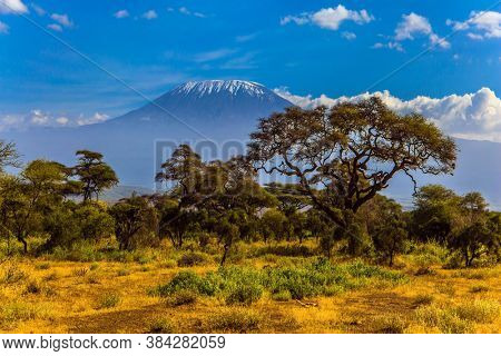 Kilimanjaro is Africa's highest point of the continent. The famous snow peak of Kilimanjaro. Savanna with rare bushes and desert acacia. The concept of active, exotic, ecological and photo tourism