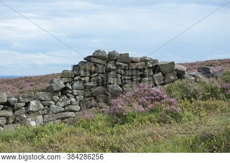 4 - Crumbling Dry Stone Wall Amongst The Heather In The Peak District. Overcast Cloudy Day And Soft