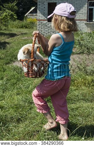 A 5-year-old Girl Plays With A Dog And Carries It In A Basket. Taken From The Back. Sunny