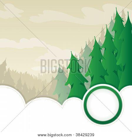 Evergreen Wilderness