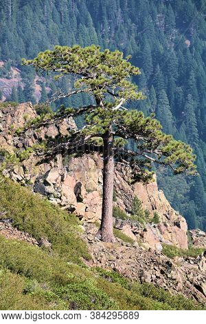 Lone Pine Tree On A Rocky Butte Overlooking An Alpine Plateau With A Temperate Pine Forest Taken At