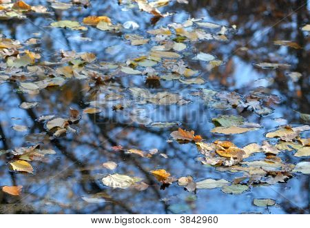 Leaves on water in a town park