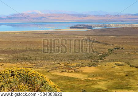 Wildflowers On A Bluff Overlooking An Arid Plateau Surrounded By Mono Lake Taken In The Rural Great