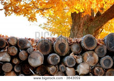 Woodpile In Autumn