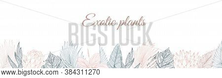 Tropical Flowers Border Pattern In Sketch Style On White Background. Background With Hibiscus, Prote