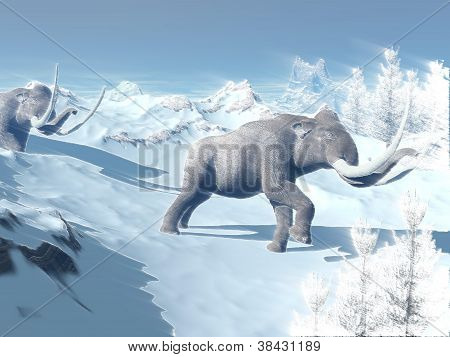 Two big mammoths walking slowly in the snowy mountain against the wind poster