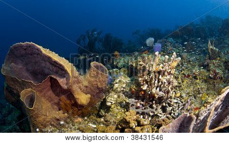 St. Lucia Reef Wide Angle