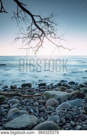 Stony Coast View With Fallen Trunk And Tree On Stony Beach. Silent Sunset With Calm Water Level Done