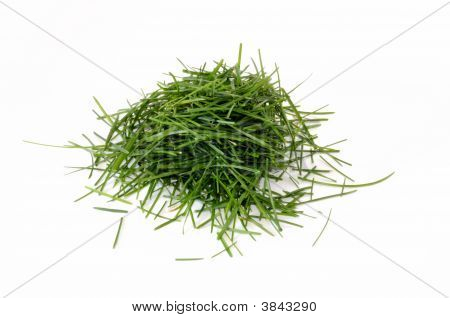 Pile Of Grass