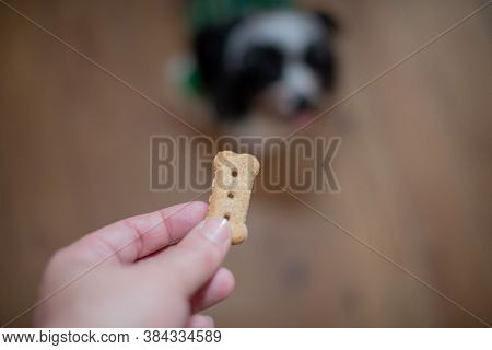 Blurred Background Of Puppy Reaching Out For Treat