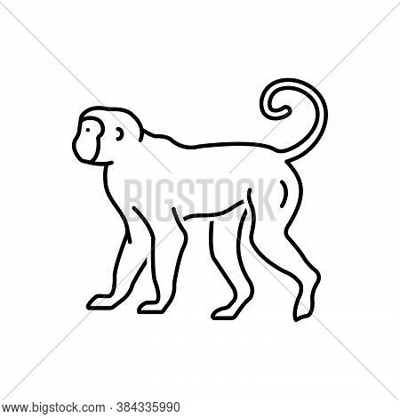 Black Line Icon For Monkey Lemur Primate Catarrhine Platyrrhine Jump Baboon Pet Chimpanzee Omnivores