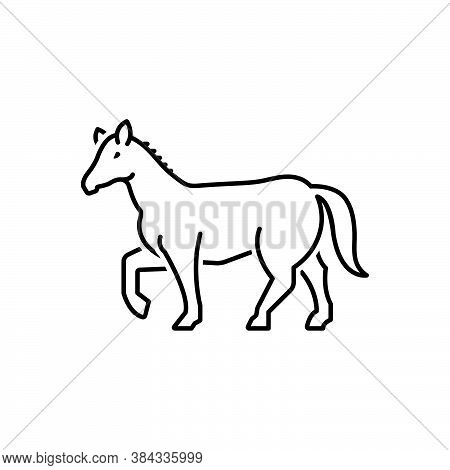 Black Line Icon For Horse Running Pony Mustang Steed Roan Stablemate Pony Equine Caballus Palomino C