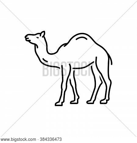 Black Line Icon For Camel Caravan Sand Desert Hump Ship-of-desert Animal Pet Dromedary Mammal Journe