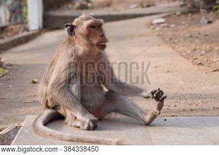 The Monkey Sitting At The Nature Place