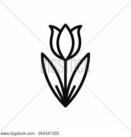 Black Line Icon For Tulip Spring-blooming Bud Seasonal-flower Decoration Natural Flower Colorful Blo