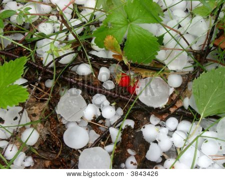 Hail And Wild Strawberry