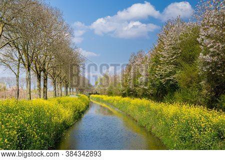 Yellow Wild Flowers Along A Ditch With Blooming Trees And A Blue Sky In Gelderland In The Netherland