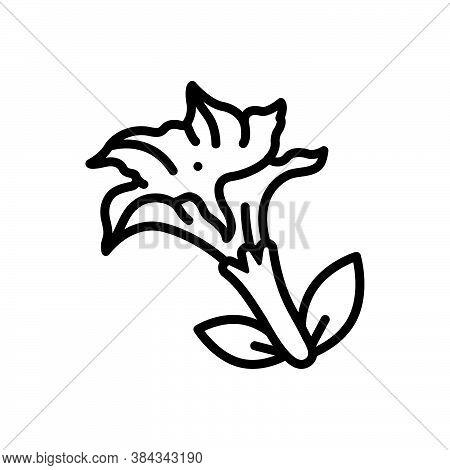 Black Line Icon For Datura-stramonium Jimsonweed Nightshade Thorn-apple Jimson-weed Pointillism Medi