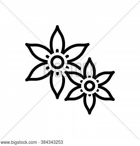Black Line Icon For Jasmine Chameli Vines Liana Fragrance Summer Horticulture Decoration Natural Flo