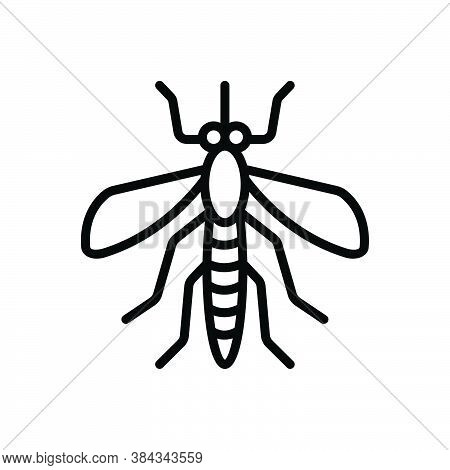Black Line Icon For Mosquito Bloodsucking Bite Disease Gnat Bug Dirty Dangerous Epidemic Prejudicial