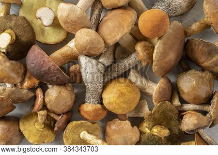 Forest mushrooms (Cep mushroom, Boletus, Borovik) on a concrete kitchen table. Autumn template backg
