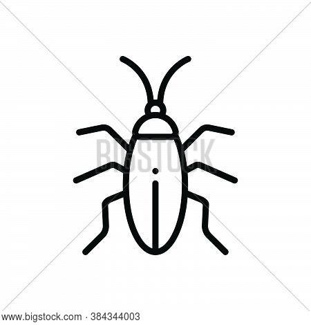 Black Line Icon For Cockroach Blattodea Bug Creepy Croton-bug Disease Dirty Harm Prejudicial Insect