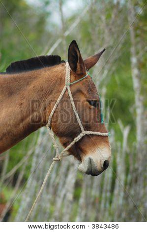 Detail of donkey head against green vegetation background poster