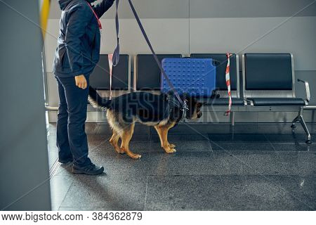 Officer And Detection Dog Checking Luggage At Airport Waiting Room