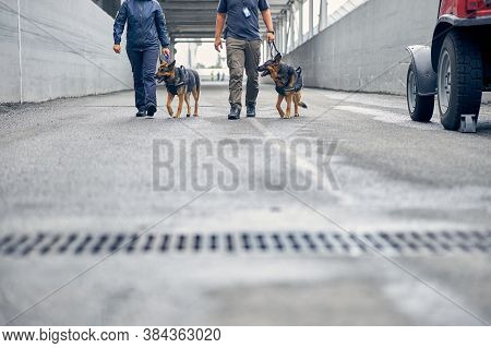 Security Guards Walking On The Street With Detection Dogs