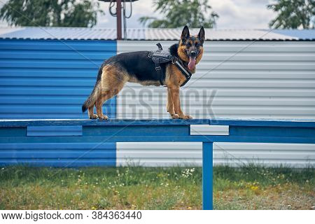 Security Police Dog Standing On Bench Outdoors