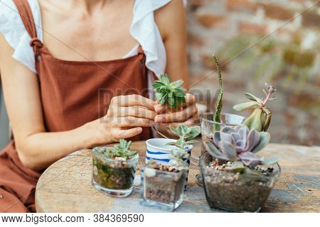 Womens Hobby. Female Nerd Florist Make A Mini Terrarium With House Plants. Blond Haired Woman Garden