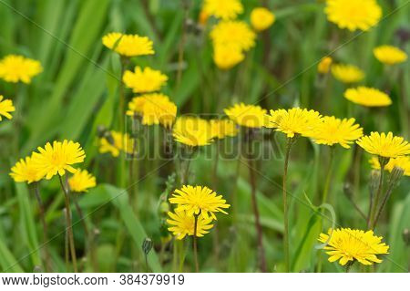 Natural Flower Photos Growing In The Countryside