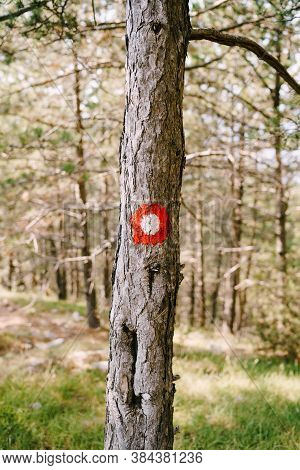 Red Dot Hiking Sign On A Tree. Red Circle With A White Dot. Direction Signs Of The Hiking Trail And