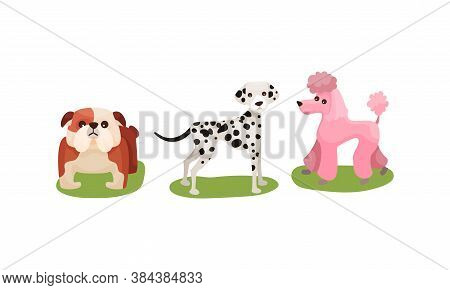 Purebred Dogs Or Canine With Dalmatian And Poodle Standing On Green Lawn Vector Set
