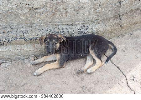 Stray Dog Lying On A Concrete Stone Slab. Black Dog, Street Stray Stray Dog Small