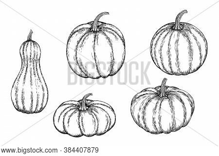 Vector Set Of A Hand-drawn Pumpkin Black White, Coloring. Ink Or Pen Sketch. Eps 10.
