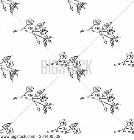 Seamless Pattern With Black-and-white Sakura Branches On White Background. Vector Image.