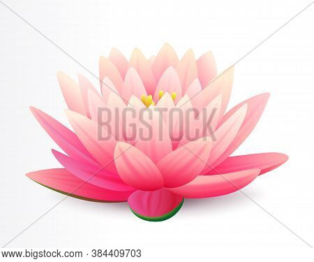 Beautiful Realistic Pink Lotus Flower Isolated On White Background, Water Plant, Vector Illustration